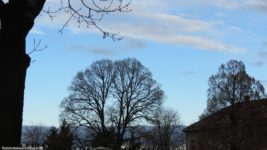 Bäume im Winter…