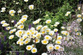 Im Garten…