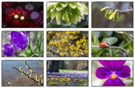 BIWYFI/ März-Collage