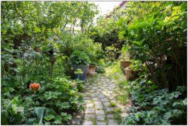 ( Wilder ) Garten am 1. Mai