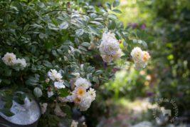 Wilder Garten im Juni…