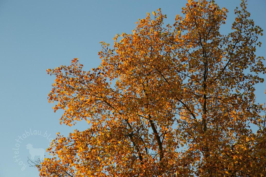 Der Herbst ist verschwenderisch…
