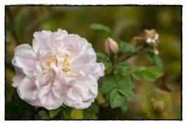 Einen letzter Blick in den Garten…