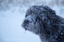 Liegt schon Schnee…?