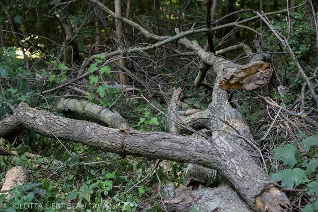 Mein Freund, der Baum…