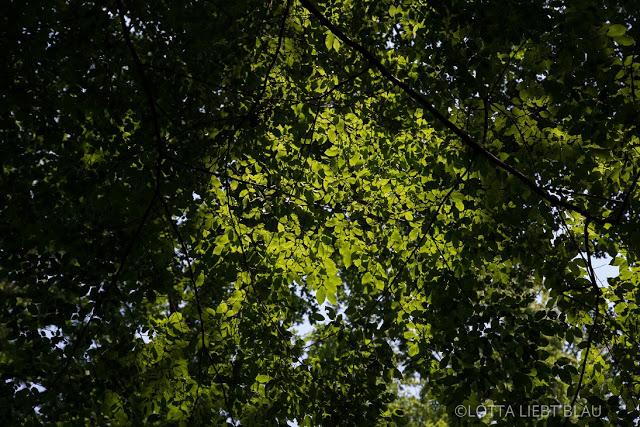 Unterm Blätterhimmel…