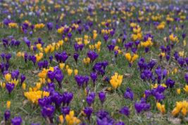 Frühlingszeit im Bloggerland
