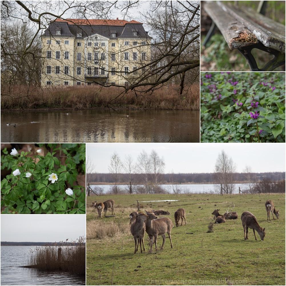 Heimat_sachsen