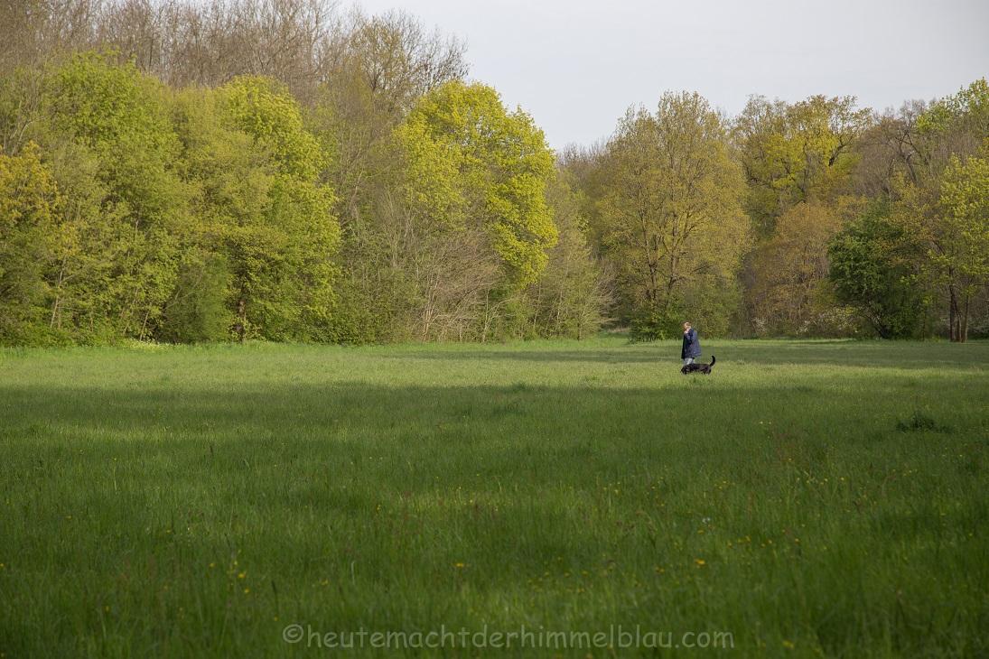 Auwaldwiesen