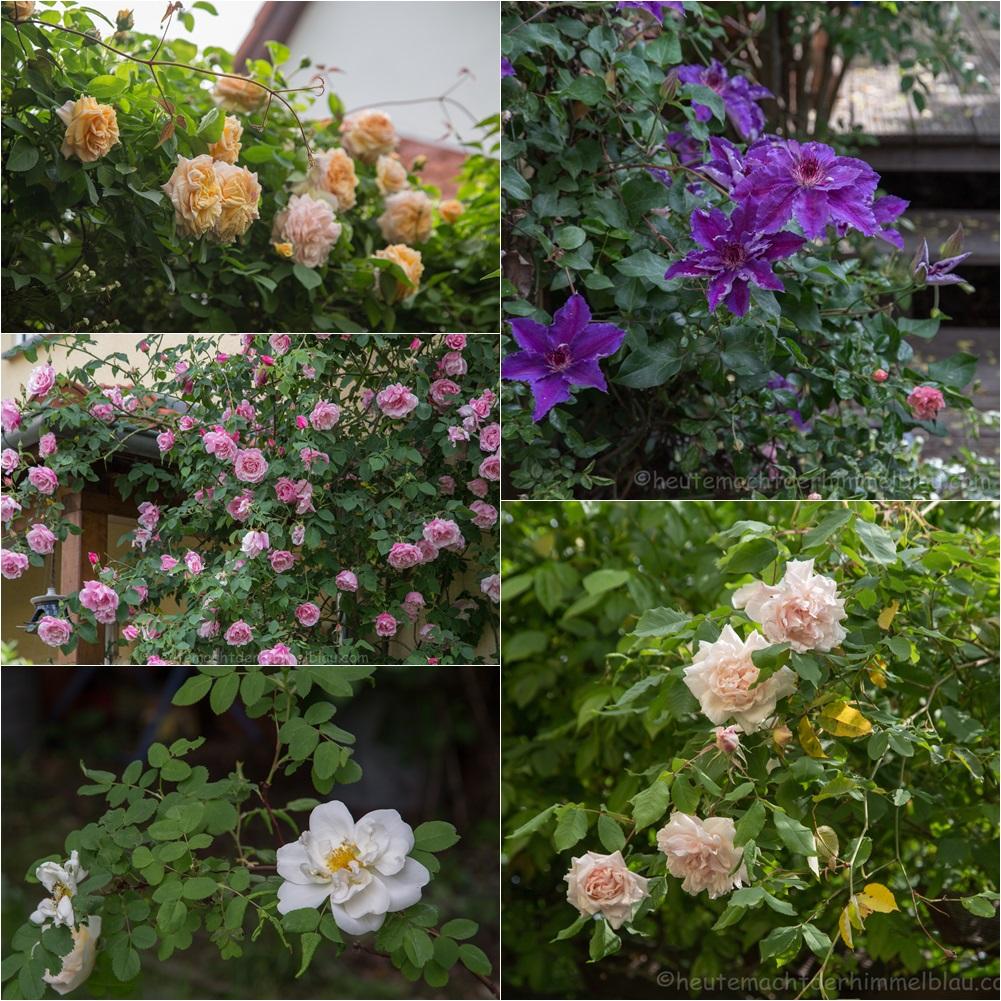 Garten Ende Mai