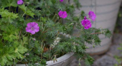 Garten im Frühjahr