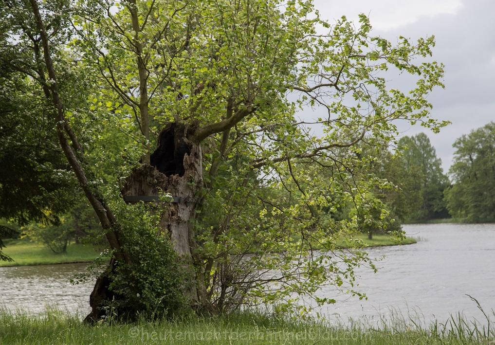 Faszinierende Baumlandschaft