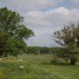 Wörlitzer Bäume