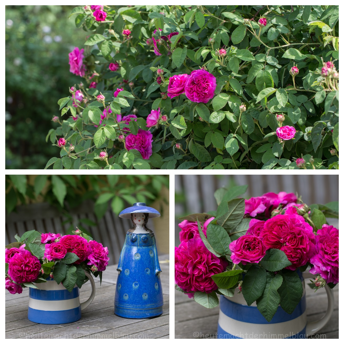 Rose Minerve