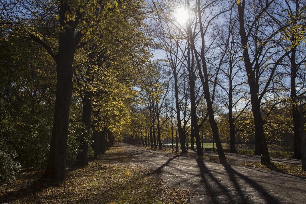 Herbst im Gegenlicht