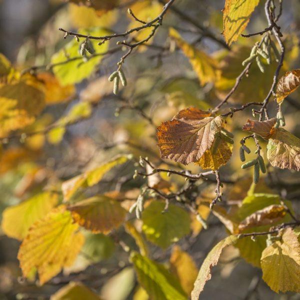 Herbstglück