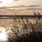 Markkleeberger See