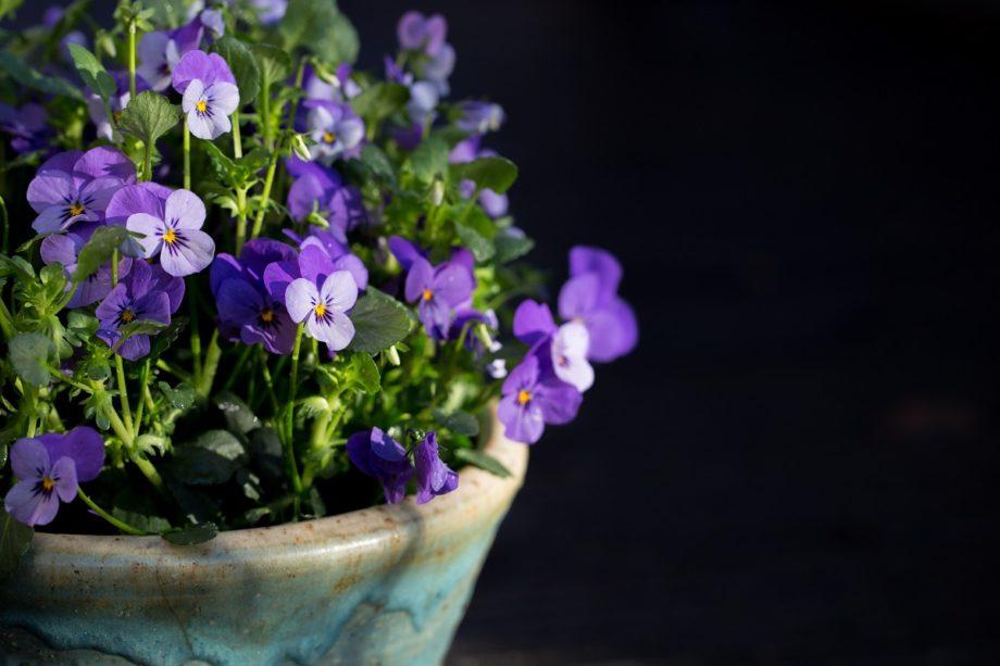 Der Frühling klopft an…