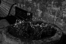 Der Frühling in Graustufen…