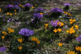 So geht Frühling…