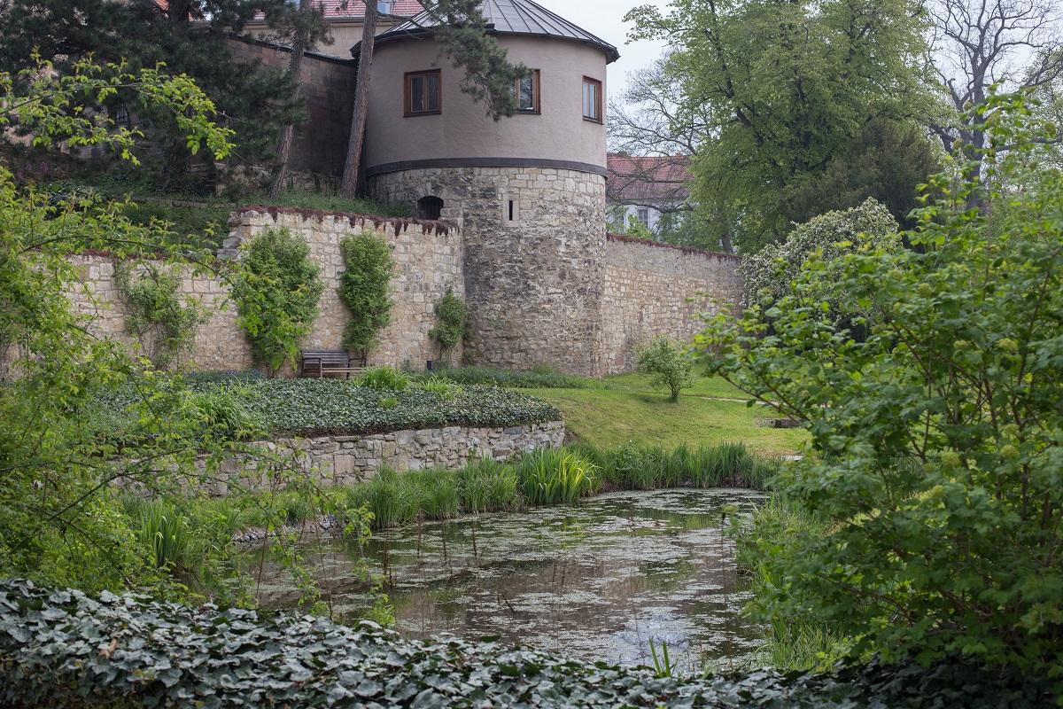 Domgarten