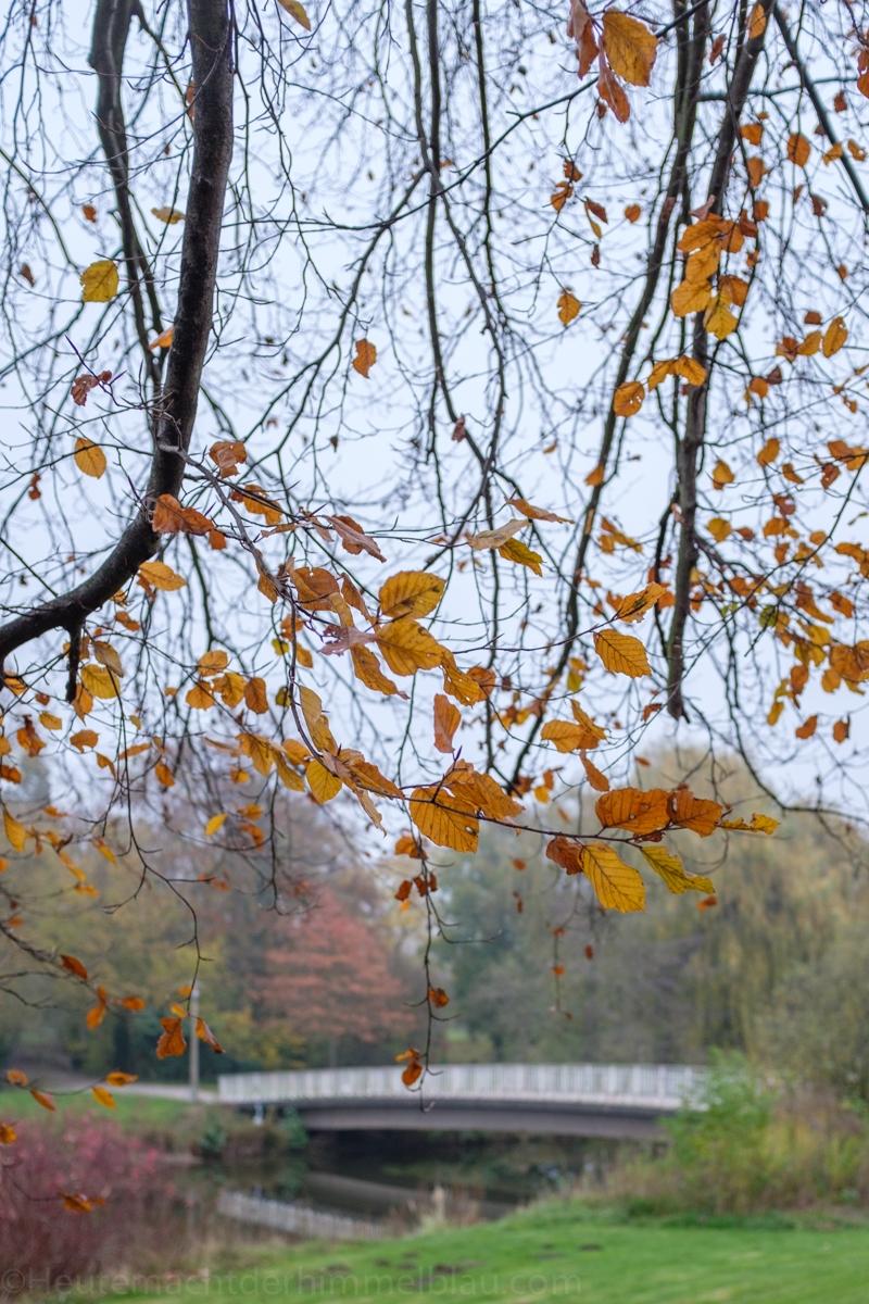 Novemberbäume