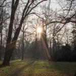Januarsonne