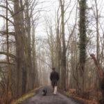Wege im Winter