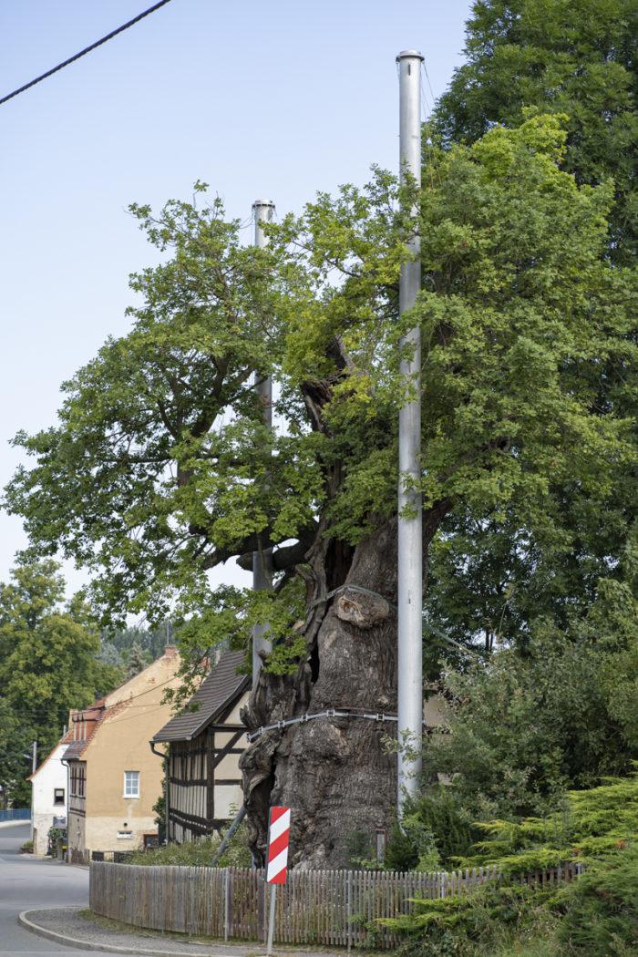 1000jährige Eiche Nöbdenitz